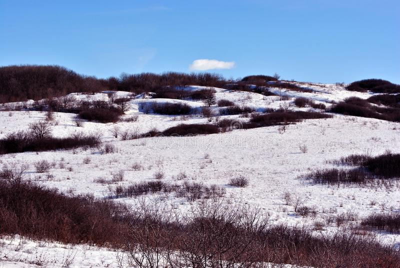 Snowy hills with thorn bushes, winter landscape, blue cloudy sky. Background royalty free stock images