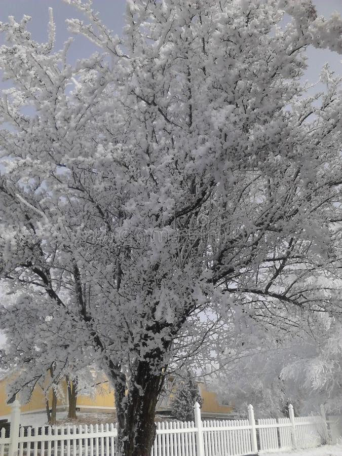 Snowy klamath county royalty free stock image