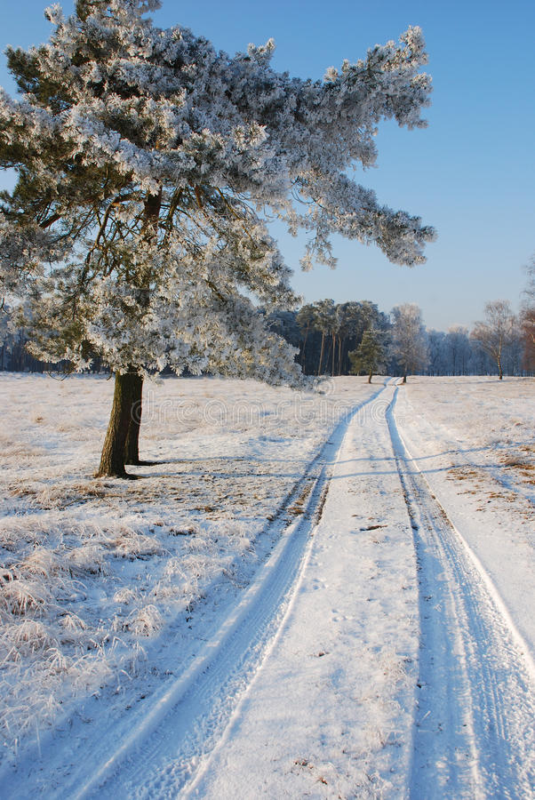 Download Snowy landscape stock image. Image of trees, sunny, freezing - 27997699