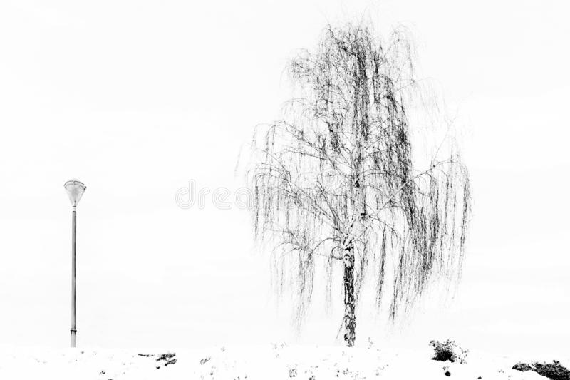 Snowy landscape with trees in black and white royalty free stock image