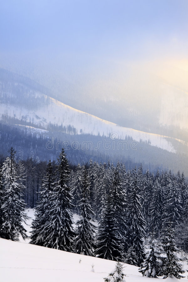 Snowy-Landschaft stockfotos
