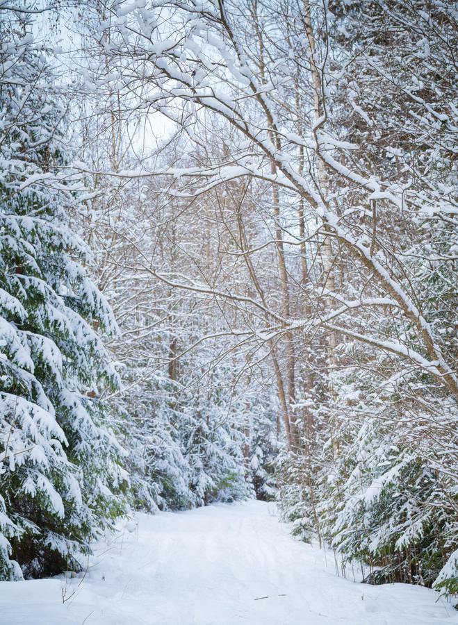 Download Snowy Lane In Winter Forest Stock Image - Image: 28602143