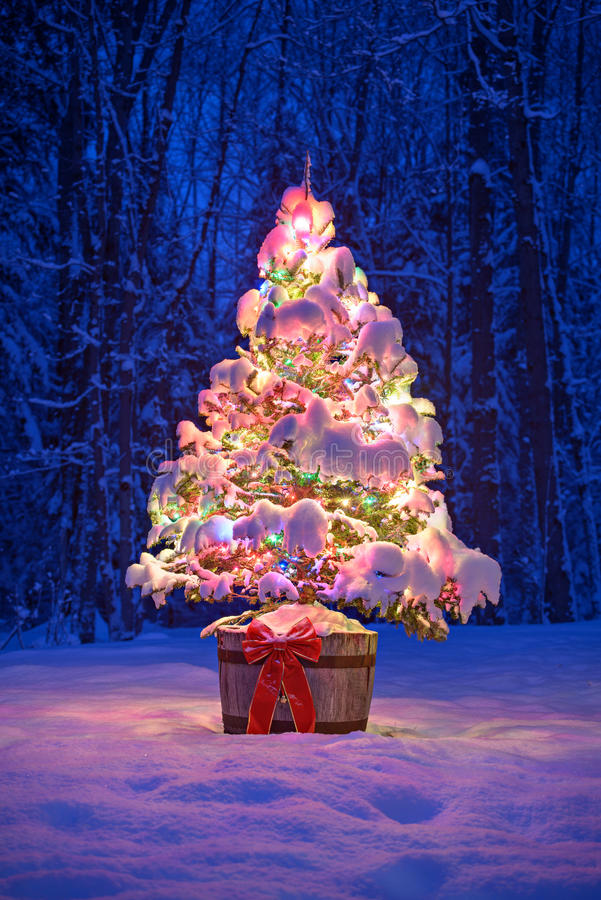 Snowy Lit Christmas Tree At Night in a Forest royalty free stock photography