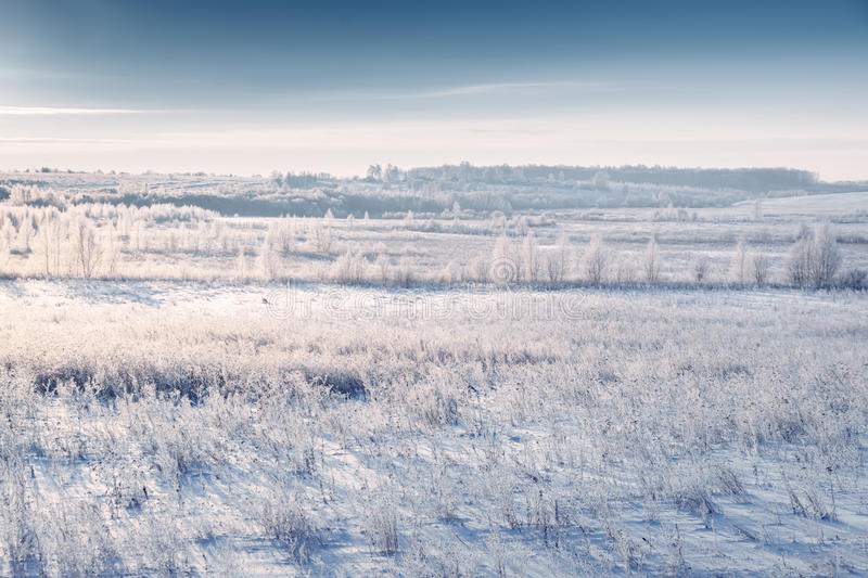 Snowy meadow and grass with hoarfrost by rising cold sun. Beautiful winter landscape. Hazy winter morning royalty free stock photo