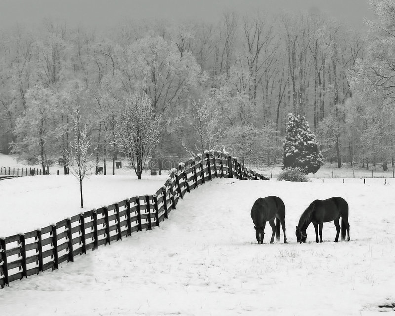 Snowy meadow & horses royalty free stock photography