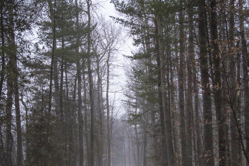 Snowy, misty forest trail. In winter. Taken in Joliette, Québec, Canada royalty free stock image