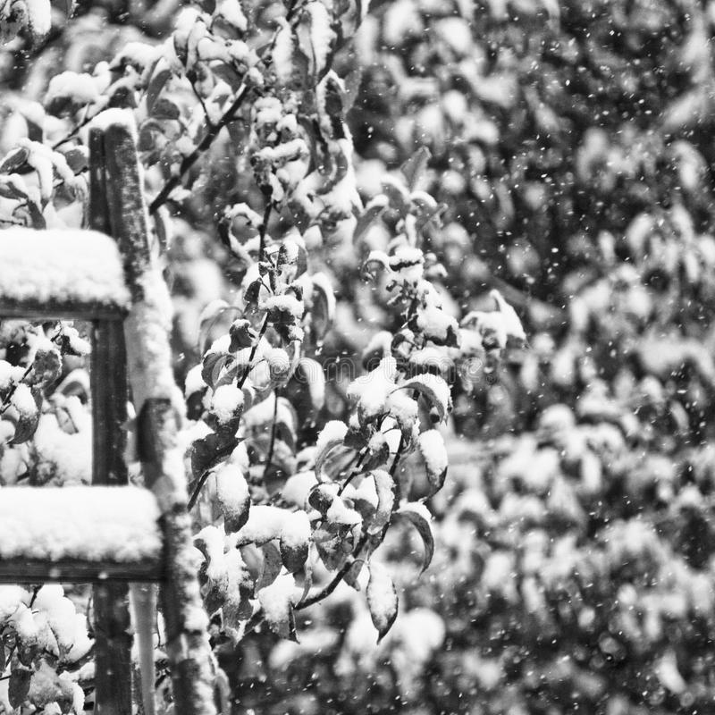 Snowy mood in black and white royalty free stock image
