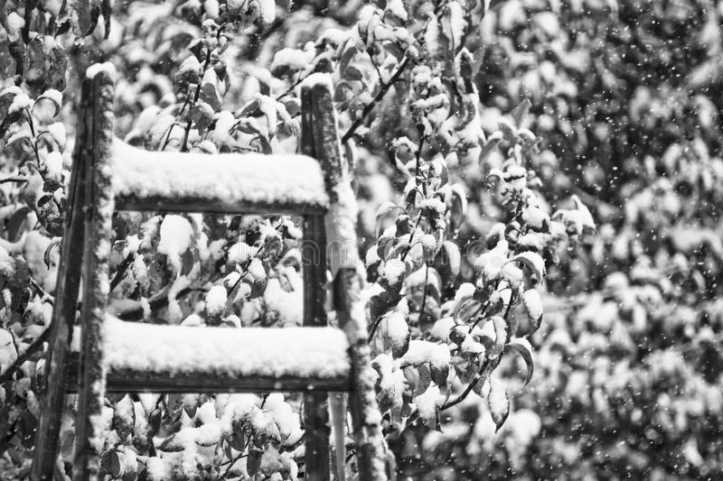 Snowy mood in black and white royalty free stock images