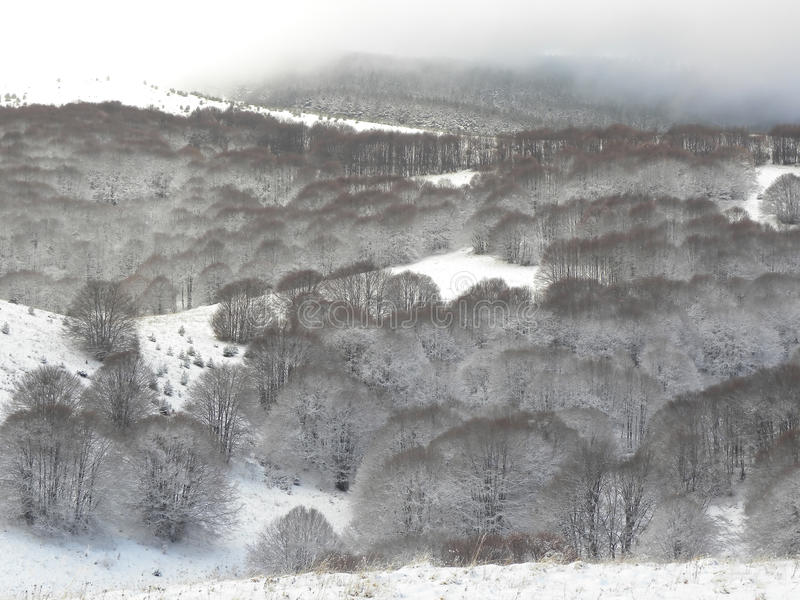 Download Snowy mountain hill stock photo. Image of mountain, broadleaved - 67863524
