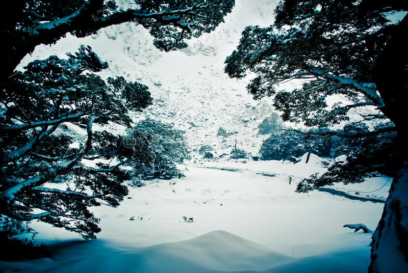 Snowy mountainous scene, framed view among the branches of some trees royalty free stock images