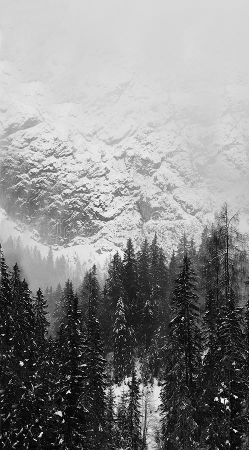 Snowy mountains and trees. Black and White image of beautiful snowy mountains and trees MULTIPLE FILE royalty free stock photo