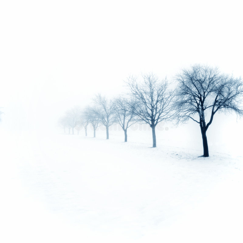 Snowy orchard stock photos