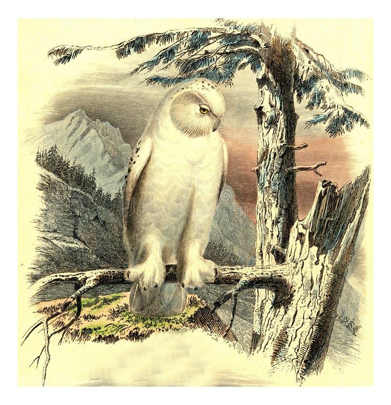 Owl Sketch vintage canvas reporter