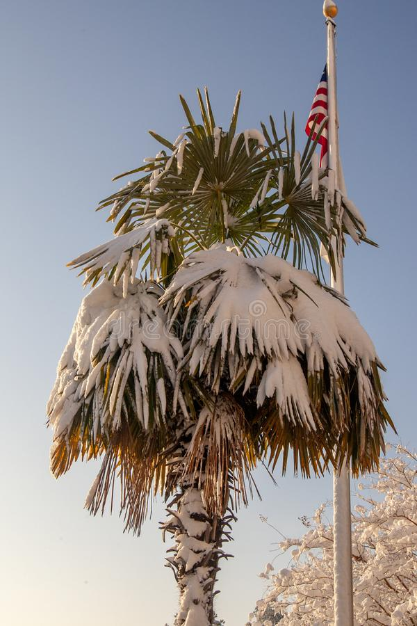Snowy-Palme und amerikanische Flagge lizenzfreie stockfotografie