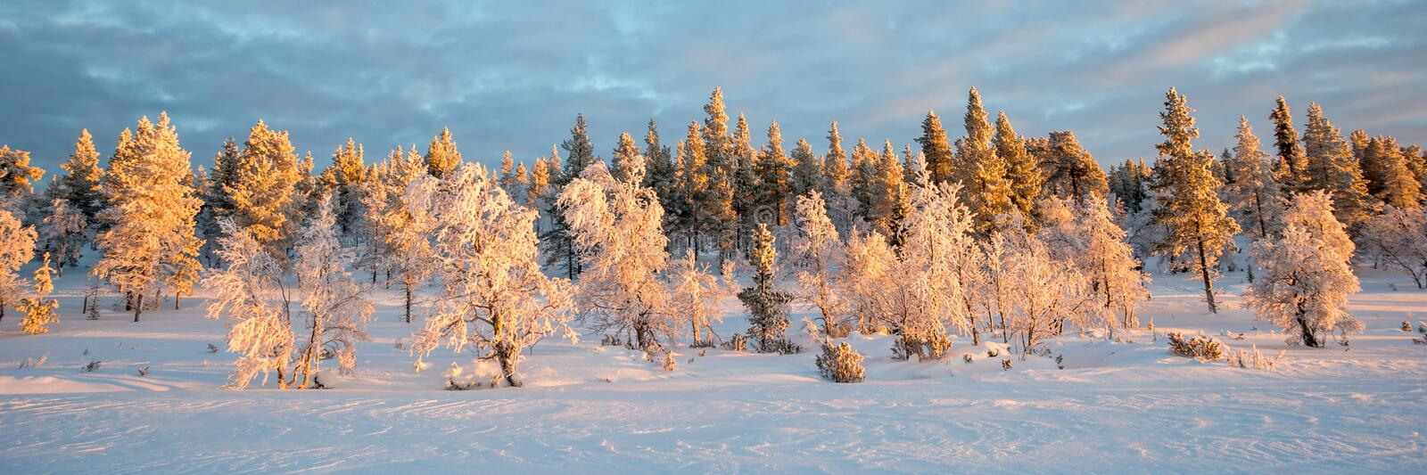 Snowy panoramic landscape, frozen trees in winter in Saariselka, Lapland Finland royalty free stock photography