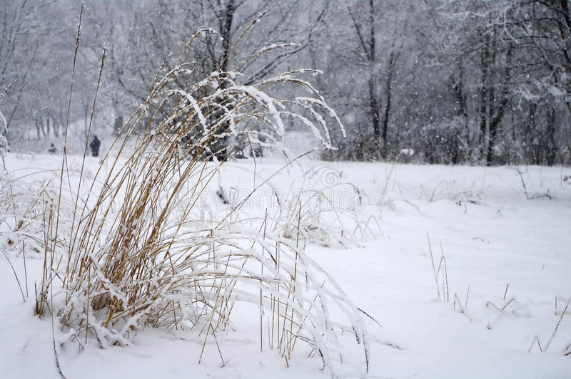 Download In snowy park stock photo. Image of outdoor, snow, freeze - 13035040