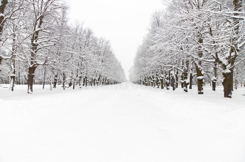 Download Snowy park stock image. Image of light, nature, branch - 21320499