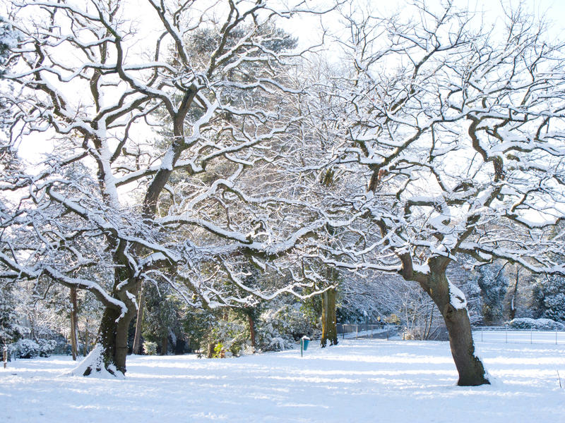 Download Snowy park stock photo. Image of blue, beauty, background - 26304868
