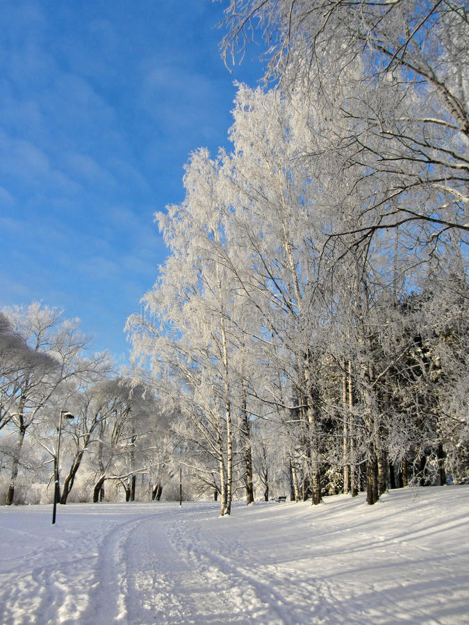 Snowy park frozen trees background