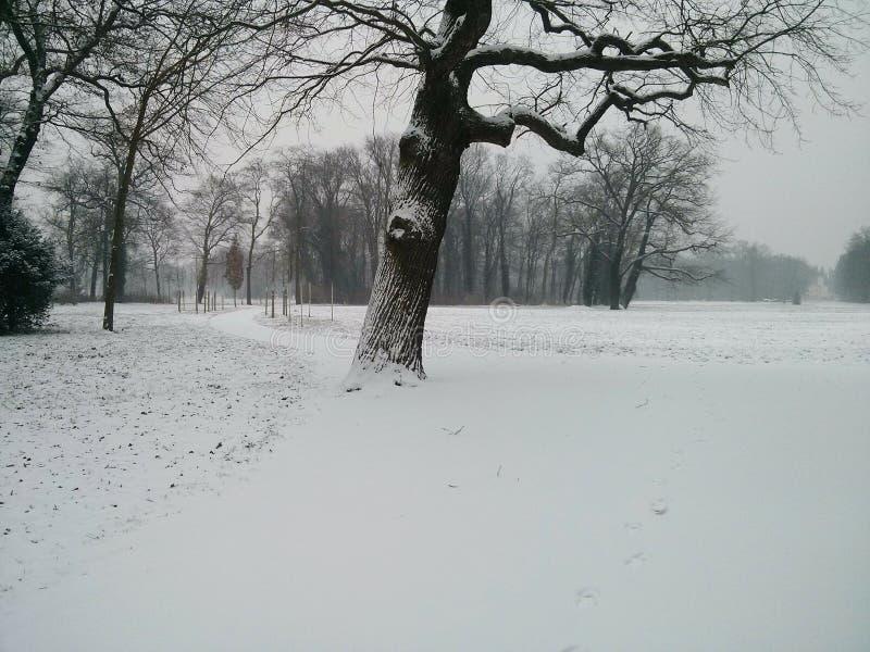 Snowy Park Sanssouci stock image