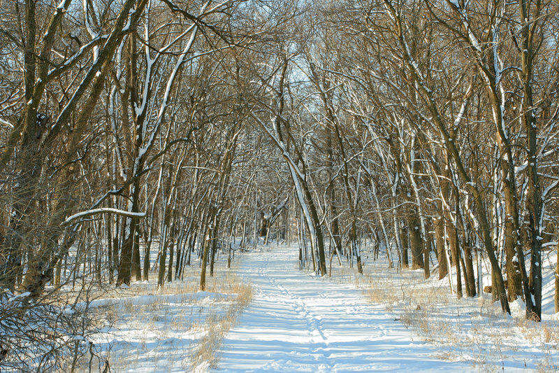 Snowy path in woods royalty free stock photography