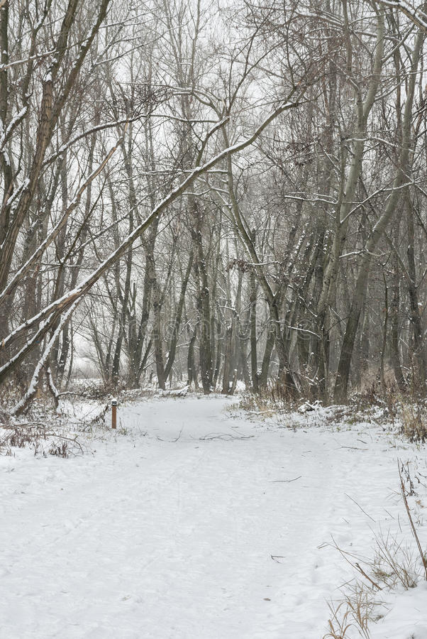 Download Snowy Pathway Through Forest. Stock Images - Image: 28379384
