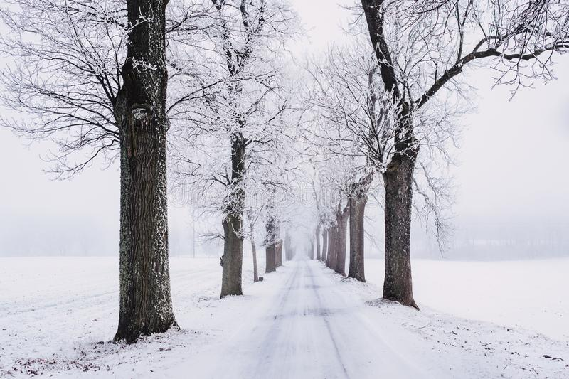 Snowy Pathway Surrounded by Bare Tree royalty free stock images