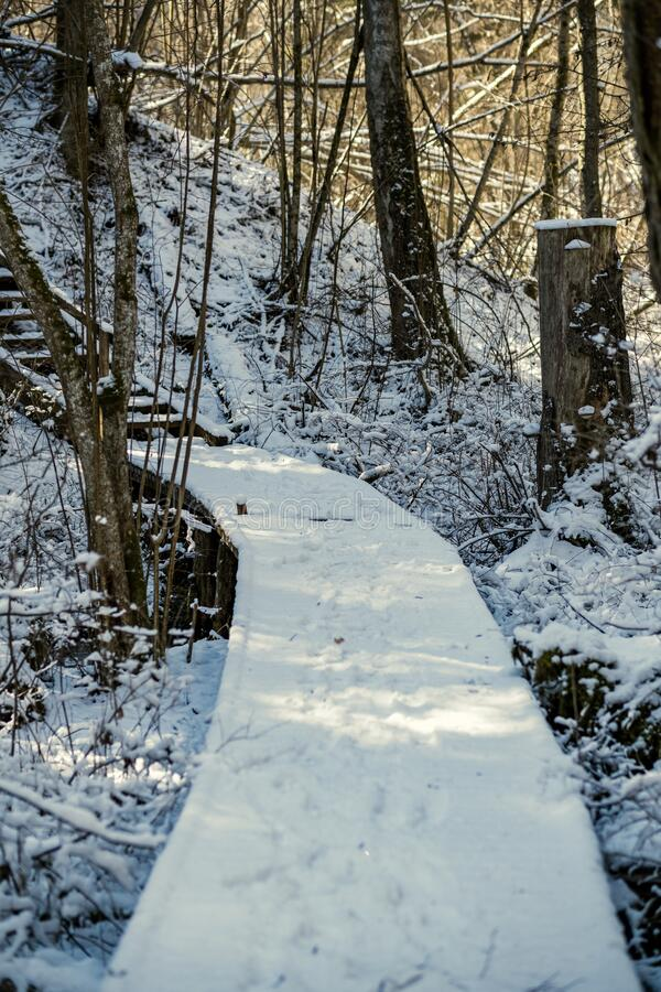 snowy pathway for walking in forest in winter stock photography