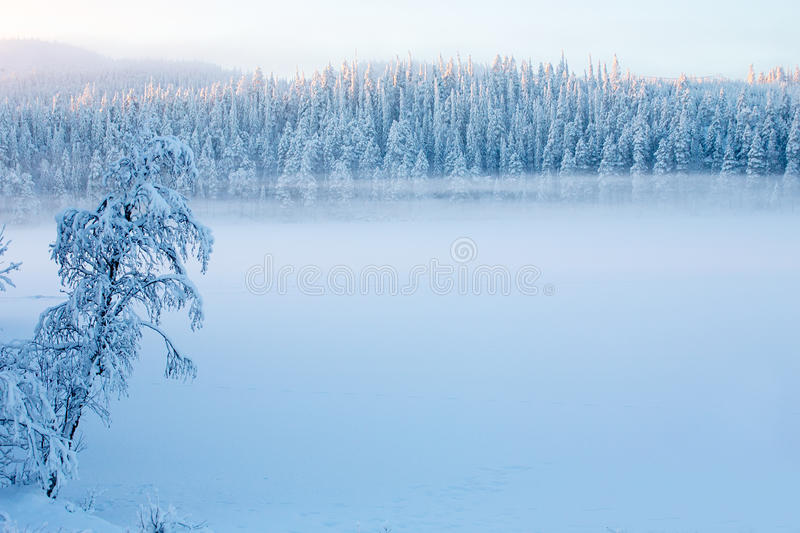 Snowy pine trees with fog on a winter landscape stock images
