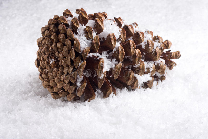 Snowy pinecone royalty free stock image