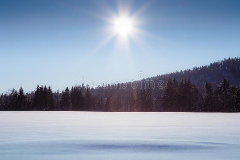 Snowy plain with pine tree forest background. On a sunny day royalty free stock images