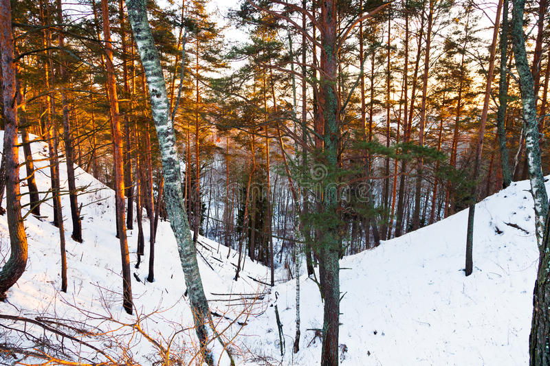 Download Snowy Ravine In Winter Forest Stock Photo - Image: 28608826