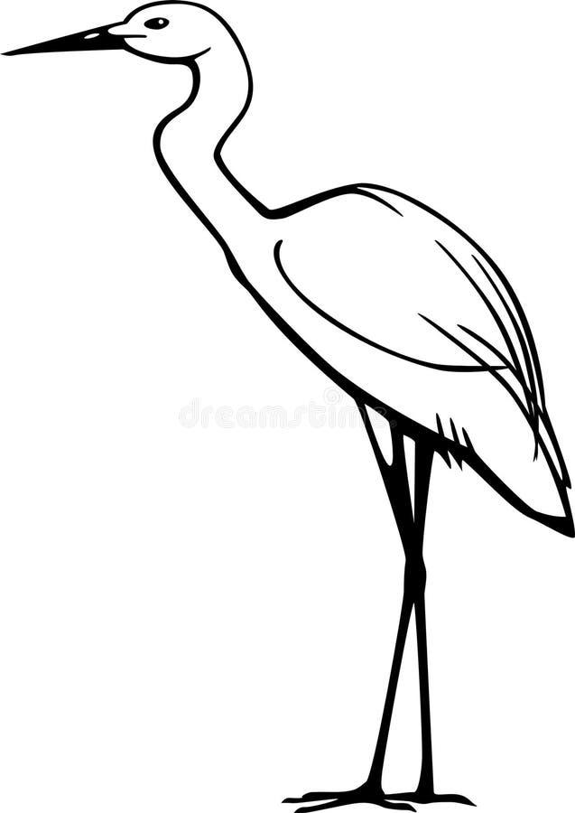 Snowy-Reiher (Egretta thula) lizenzfreie abbildung