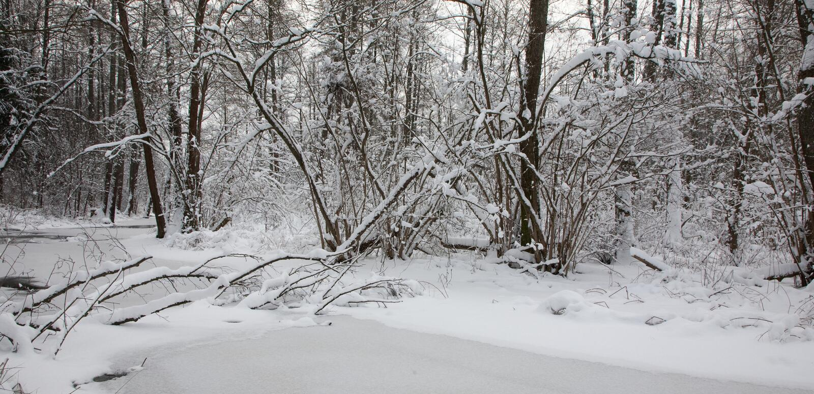 Snowy riparian forest over partly frozen river stock images