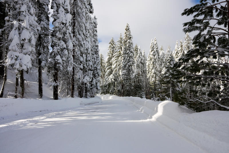 Snowy road. Through a forest royalty free stock image