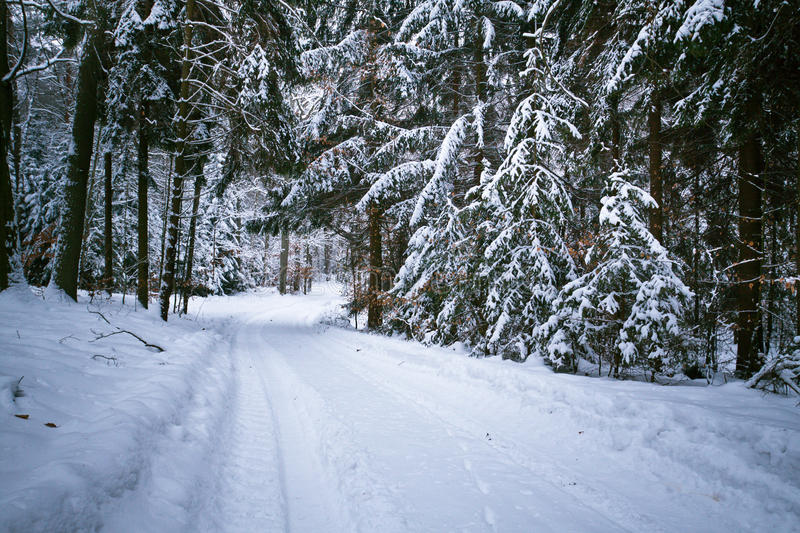 Snowy road in forest stock photo