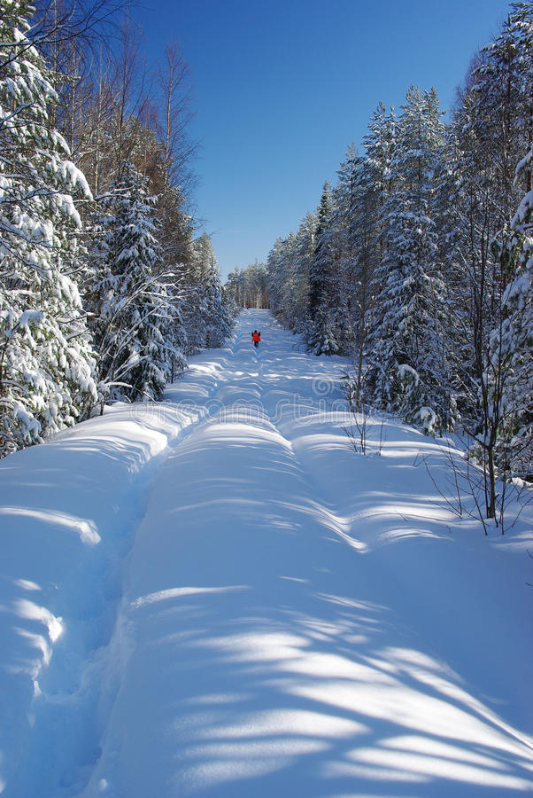 Snowy road in the forest stock image