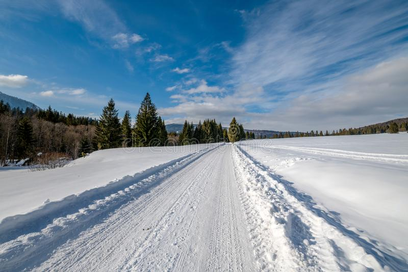 Snowy road in the forest seen from a different perspective royalty free stock photography