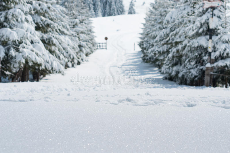 Snowy road. In a mountain forest stock photography