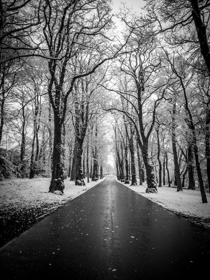 Snowy road with trees stock photos