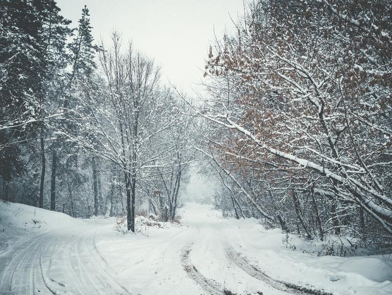 Snowy road in winter blizzard, alley from frozen trees royalty free stock photo