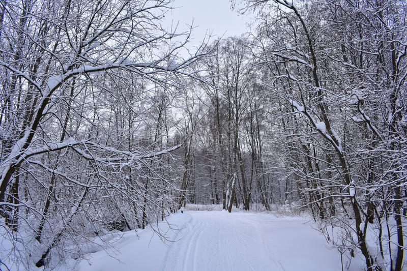 Snowy road through winter forest stock photography