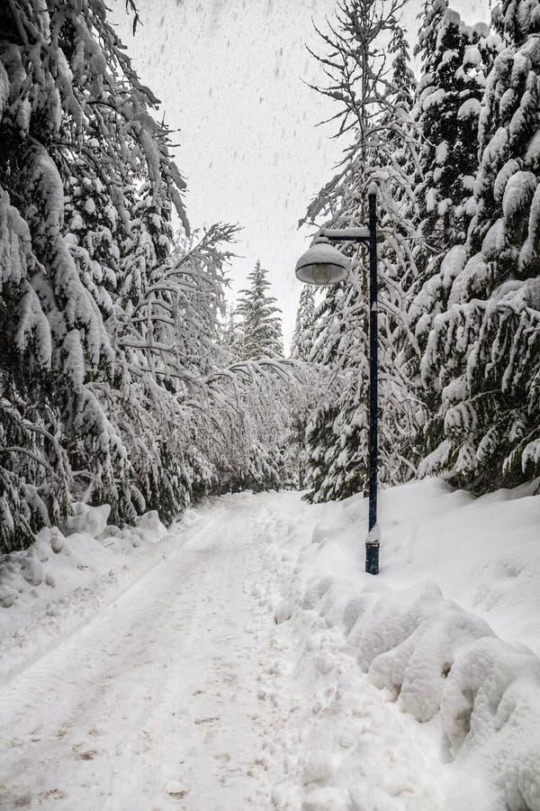 Snowy-Spur durch DSnowy-Spur durch Laubbäume mit Straßenlaterne, Pfeifer, eciduous Bäume mit Straßenlaterne, Pfeifer, BC stockbild