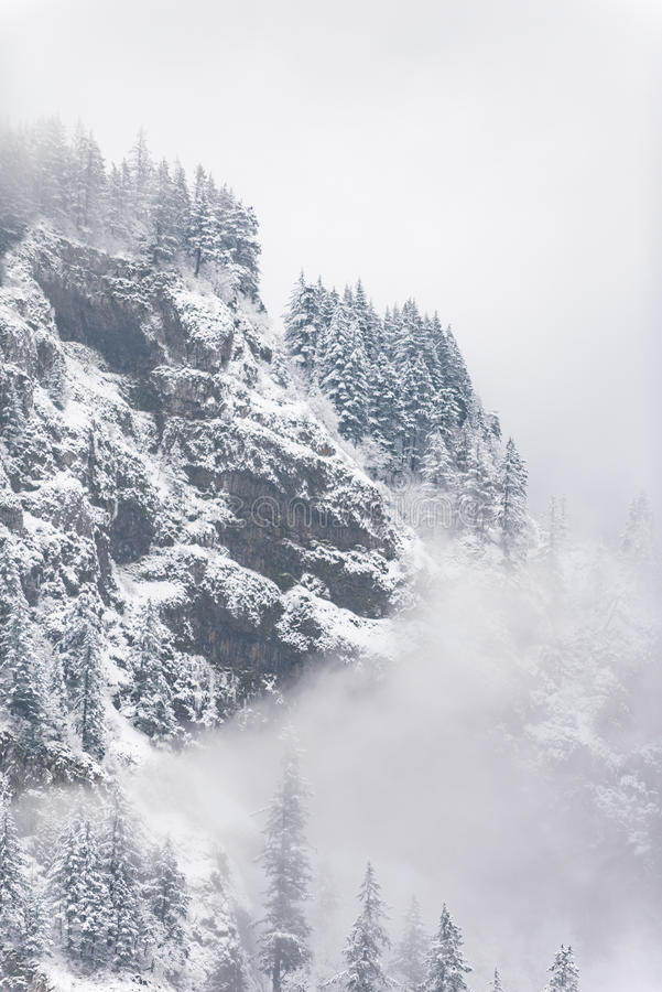 Snowy steep mountain with high trees. Pleasing view of frozen cliff with dense fir forest in winter in United States royalty free stock photography