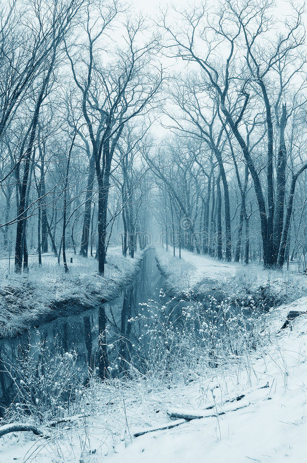 Free Snowy Stream In The Woods Royalty Free Stock Photo - 4204925