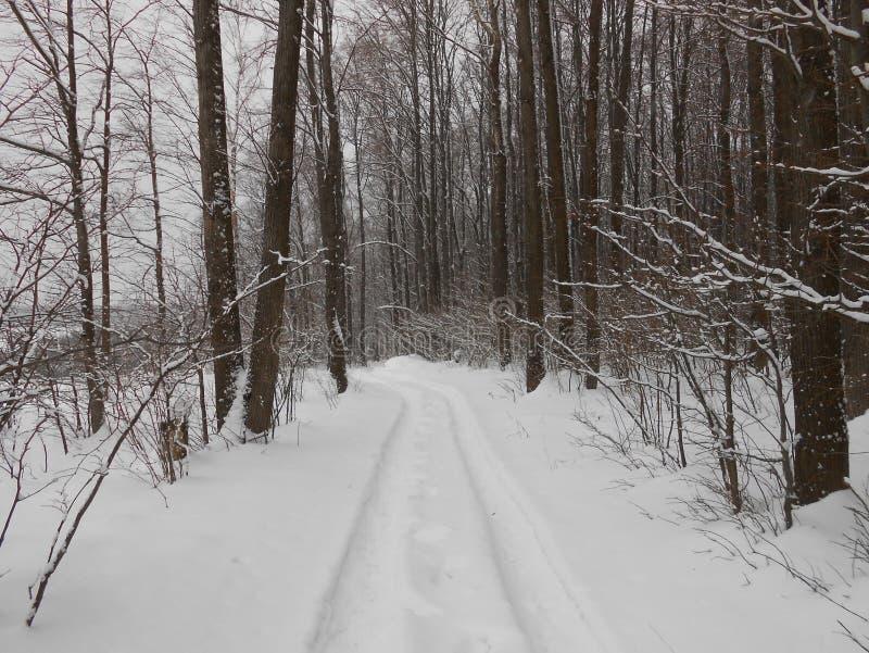 Snowy tracks. stock photography