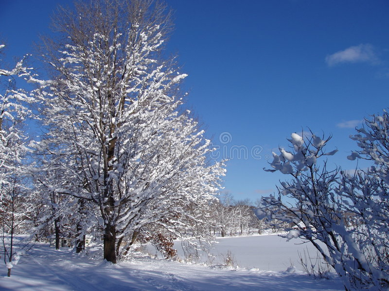 Download Snowy Trail stock photo. Image of cold, crosscountry, country - 249496
