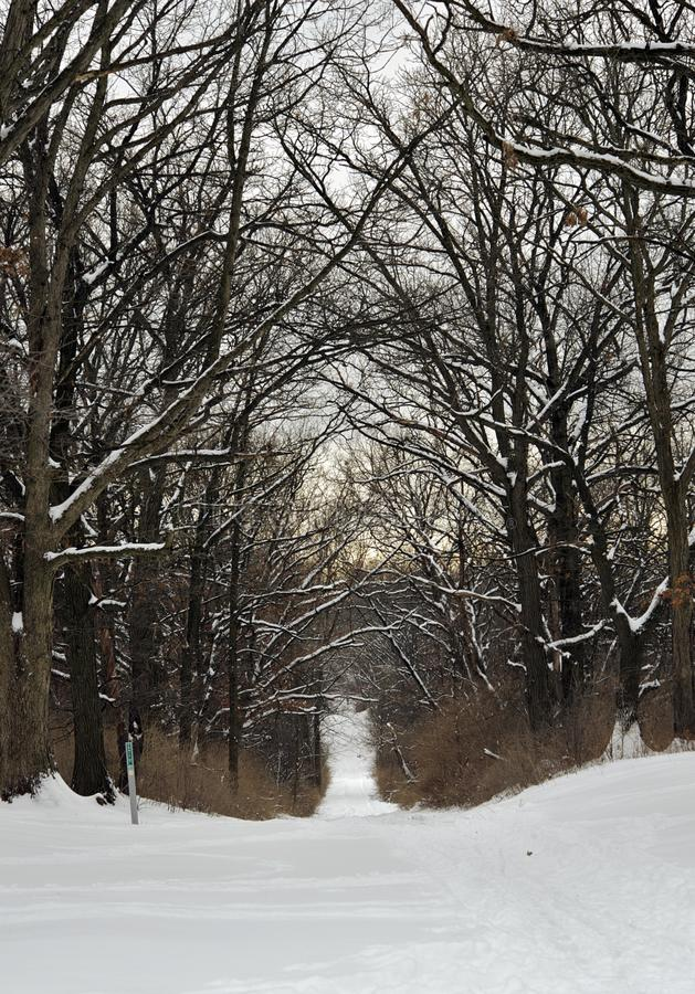 Download Snowy Trail stock image. Image of preserve, winter, snowy - 25957793