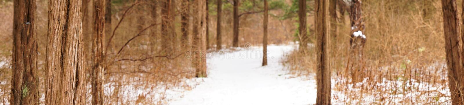 Snowy trail through tall red cedars stock images