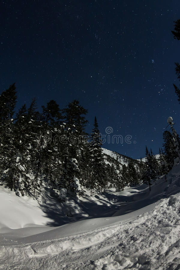 Snowy trail in winter forest under the night sky.  stock photo